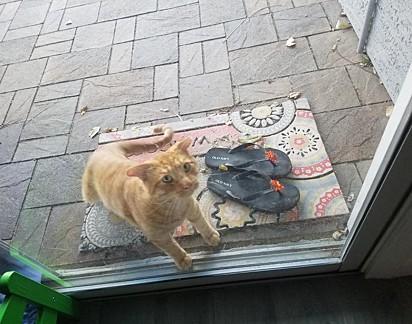 Jen encontrou o gatinho malhado no quintal da sua casa.