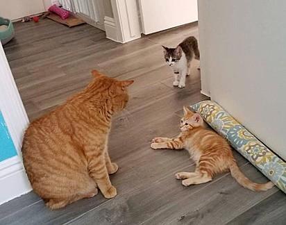 Até para dar bronca o gatinho é carinhoso.