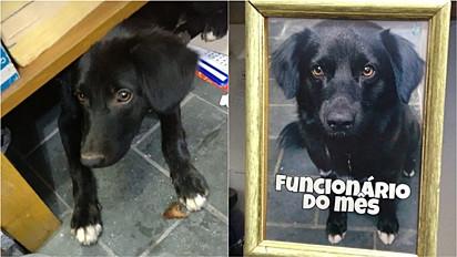 Cachorro é regatado por comerciantes e se torna o funcionário do mês.