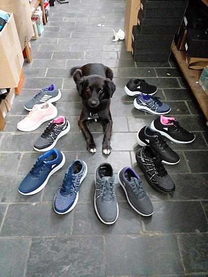 O cachorrinho se tornou garoto propaganda da loja.