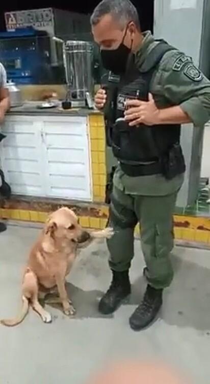 O caramelo pedindo carinho para o sargento.