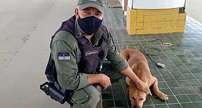 O sargento voltou ao local para visitar o caramelo.