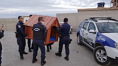 A Guarda Municipal de Viana fez o pedido para detentos que trabalham na marcenaria para fabricarem uma casinha para o mais novo membro da equipe.