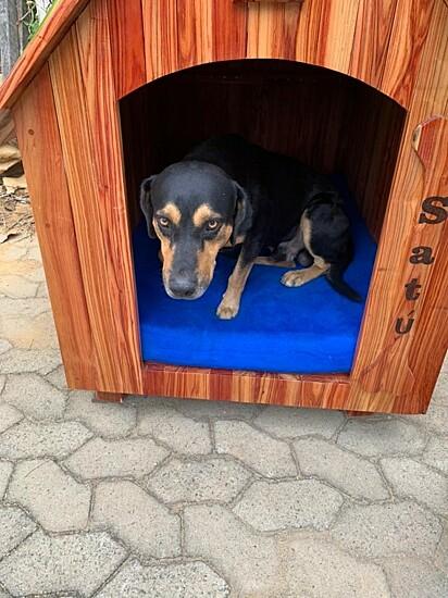 O cachorrinho Satú na sua nova casinha.