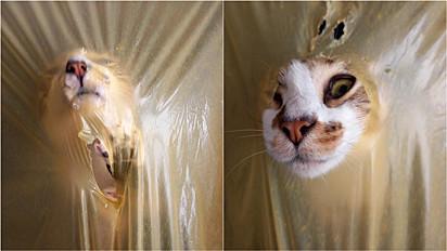 Mulher flagra momento hilário do seu gato se divertindo.