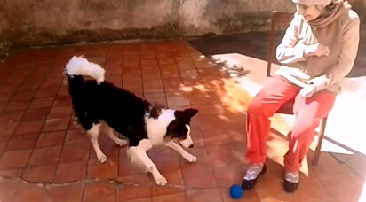 O cachorrinho muito amável interage com a idosinha.