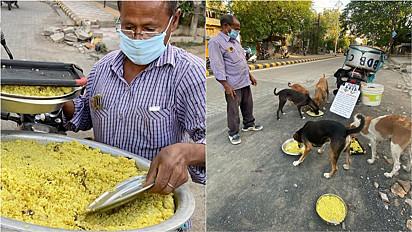 Homem cria projeto e alimenta 150 cães de ruas todos os dias.