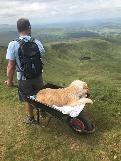 O homem não mediu esforços para realizar a última aventura com o seu cão.