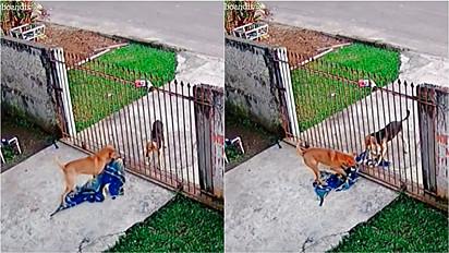 Caramelo doa cobertor para cachorro de rua.