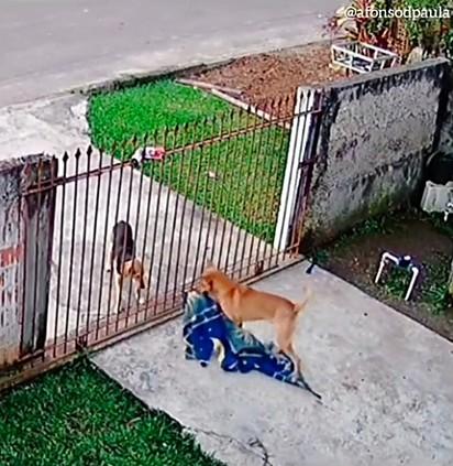 O pequeno pegou o cobertor para entregar para um cachorro de rua.
