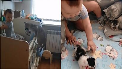 Gata leva seus filhotes até berço para apresentar a bebê.