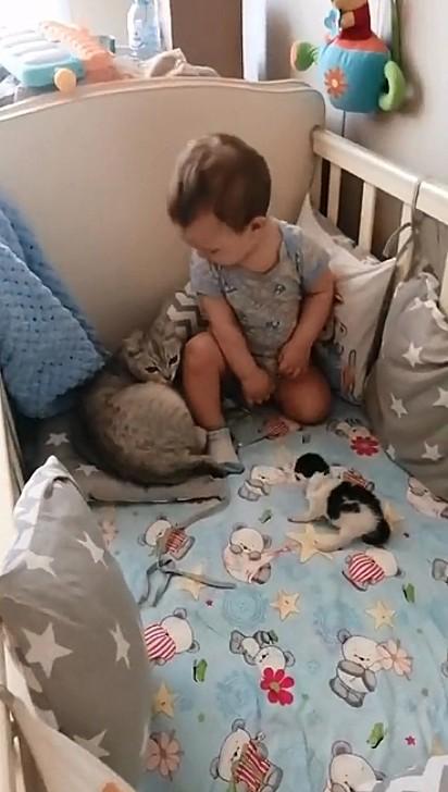 Ao perceber a presença dos gatinhos a criança sentou-se na cama para interagir.