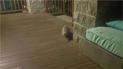 Mulher se surpreende com visita noturna na varanda de casa.