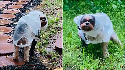 Mulher confecciona capa de chuva para o seu cachorro poder fazer xixi no quintal em dia com garoa.
