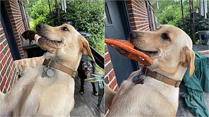 El cachorro siempre regresa a casa con un regalo.