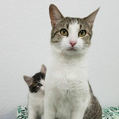 A gatinha Jade com um dos seus filhotes.