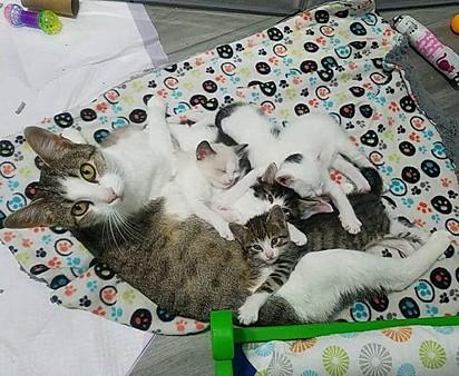 Jade deu à luz cinco filhotes.