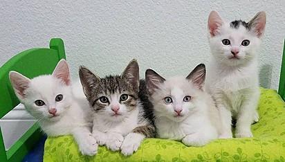 O quarteto foi adotado junto.