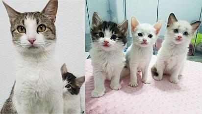 Gata pede ajuda em residência para garantir segurança para seus filhotes.