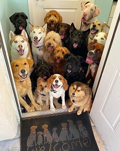Toc toc... Cães na porta.