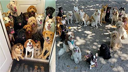 Creche para cães registra fotos perfeitas com seus alunos.