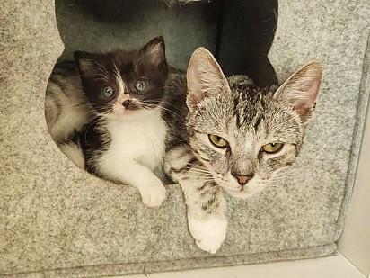 Andrzej se tornou um grande companheiro da felina.