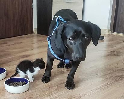 O felino com o cachorrinho Dres.