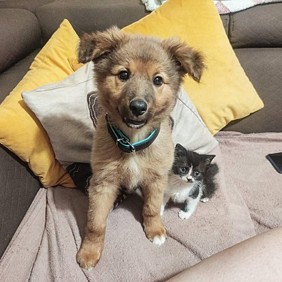 O pequeno gatinho também fez amizade com o cãozinho Michael Scott.