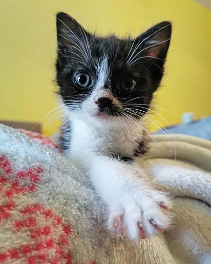 Não demorou para que o pequeno felino encontrasse o seu lar definitivo.