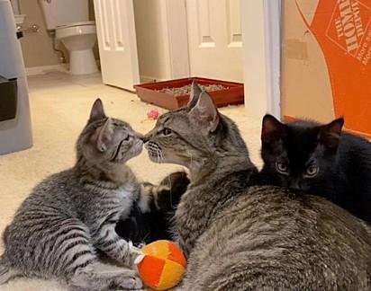 A gatinha demostrou amor por todos os seus filhotes.