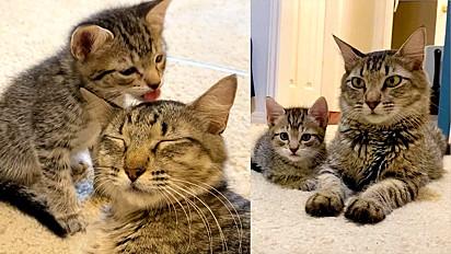 Gatinha é resgatada a tempo de dar à luz cinco filhotes.