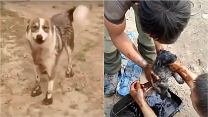 Cachorra chama atenção de resgatadores para salvarem o seu filhote.