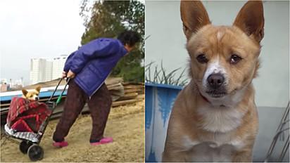 Idosa resgata cachorro paraplégico abandonado em lixão.