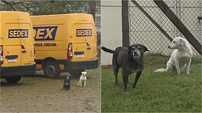 Justiça Federal determina permanência de cachorras na sede dos Correios em Porto Alegre.