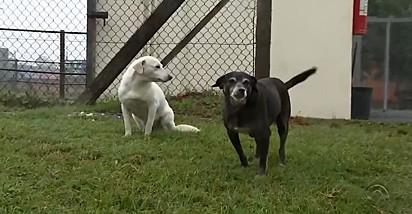 As cachorrinhas Branquinha e Pretinha.
