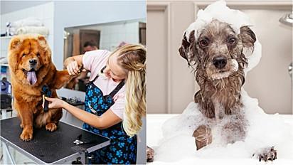 Vereador cria projeto em que pets shops que forneçam banho e tosa filmem todo o processo.