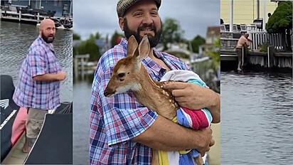 Homem salva filhote de cervo de provável afogamento.