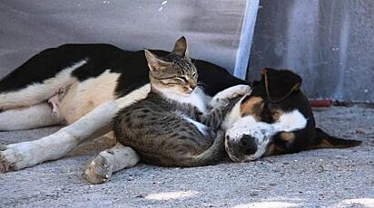 O gato e o cachorro se uniram para superar juntos as adversidades da vida.