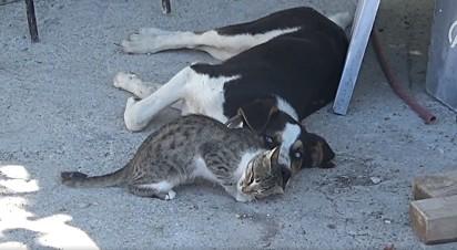 O gato dorme junto com o cachorro em uma cena adorável.