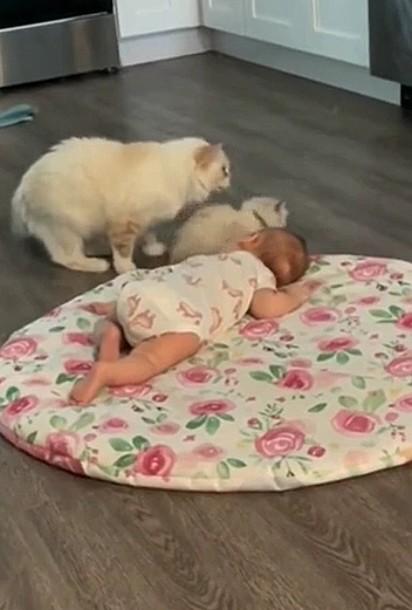 A felina incentivou o filhote a interagir com o bebê.