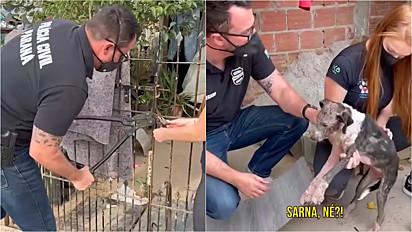 Delegado Matheus Laiola, juntamente com o Instituto SOS 4 Patas Paraná, resgataram dois animais que viviam sob maus-tratos.