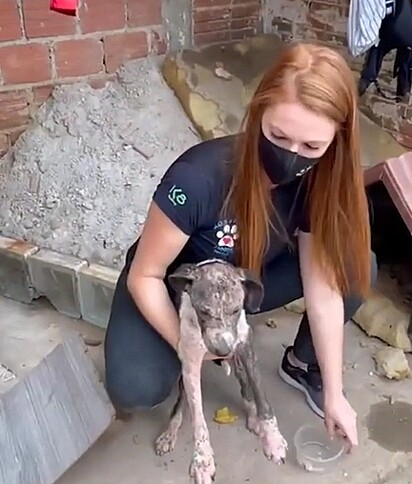 A cachorrinha estava muito debilitada e foi encaminhada para tratamento médico.