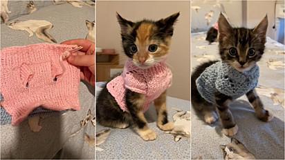 Jovem tricota suéteres para os seus gatos ficarem protegidos em dias de frio.