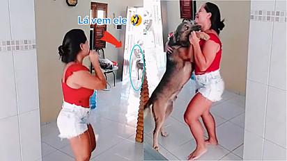 Cachorro não pode ouvir uma música que logo procura a dona ara dançar.