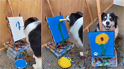 Cadela pinta sem esforço uma linda flor em quadro.