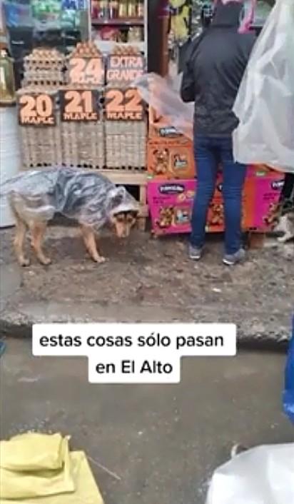 O cachorrinho foi flagrado usando uma sacola para se proteger da chuva.