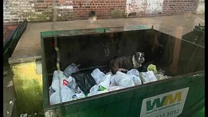 A cachorrinha foi abandonada no lixão.