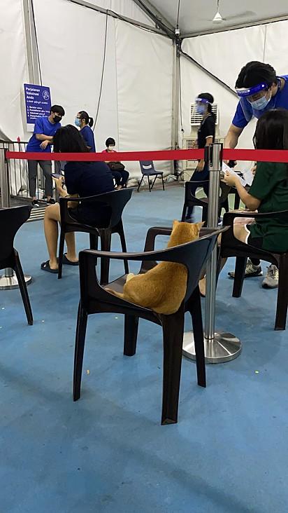 O gatinho viu uma cadeira disponível na fila e resolveu se acomodar ali.
