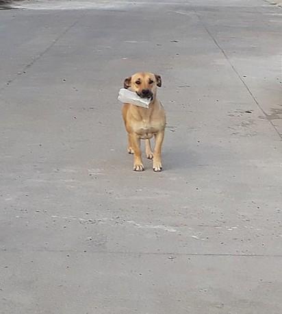 A cachorrinha Chepina.