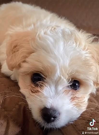 O cachorrinho Max.